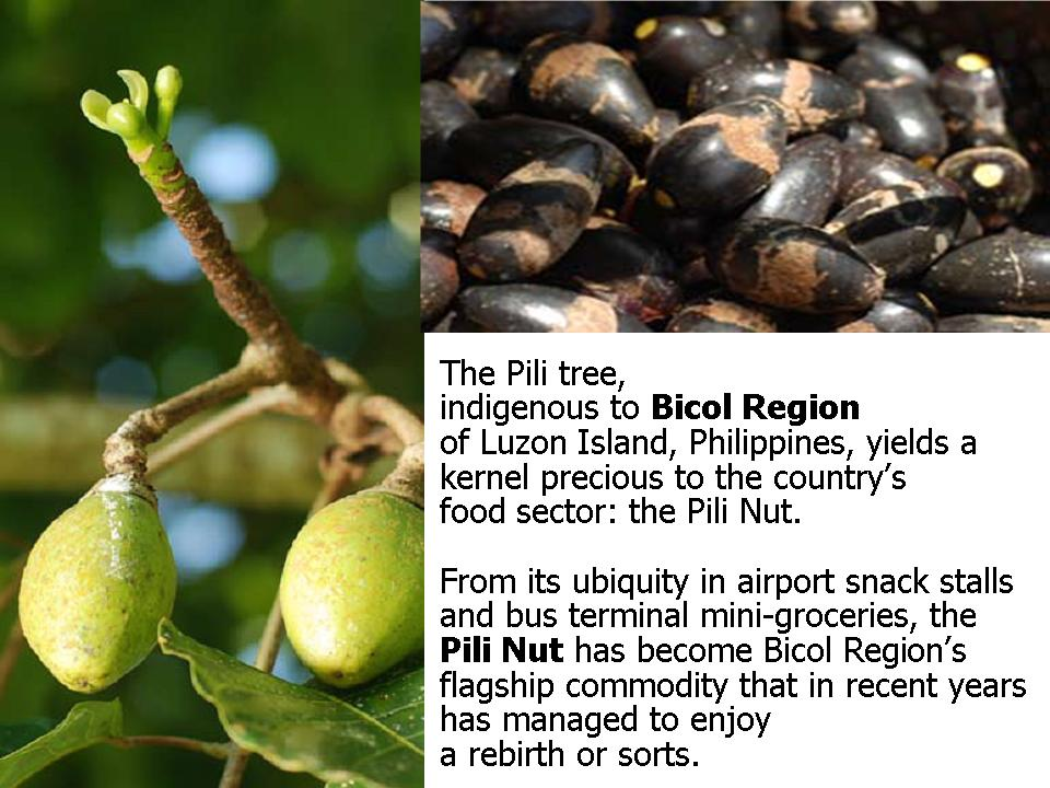 """The Pili Nut of Bicol, Philippines: """"In a nutshell, it's"""